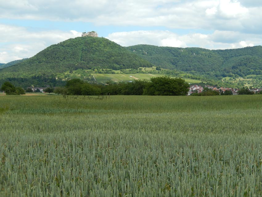 Neuffen Getreidefelder, Hohen Neuffen